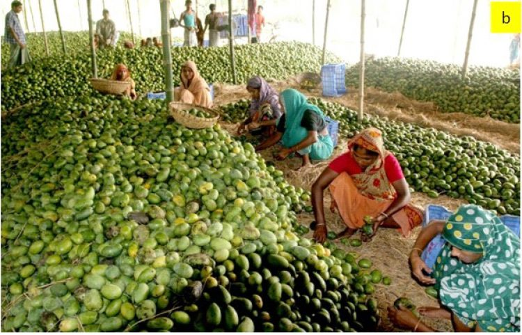 Biosensing for Advancing Quality of Agricultural Produce in Bangladesh
